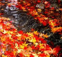 leavessmall